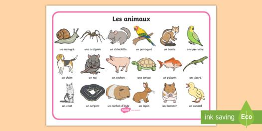 animaux t