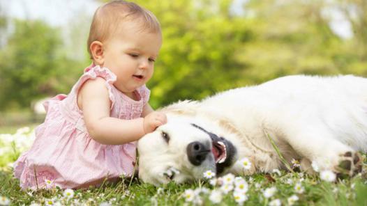 bébé et animaux