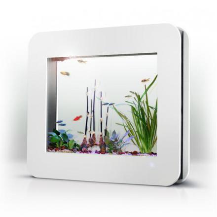 cadre aquarium