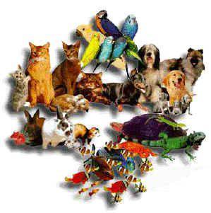 catégorie animaux