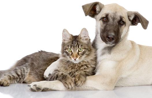 chat chien et compagnie