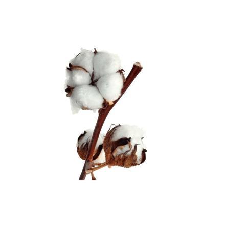fleur en coton