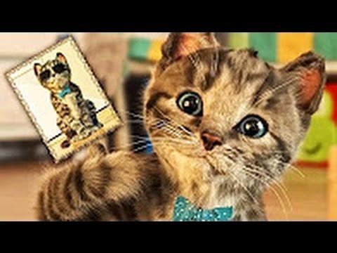 jeux de petits chats