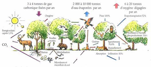 l écosystème