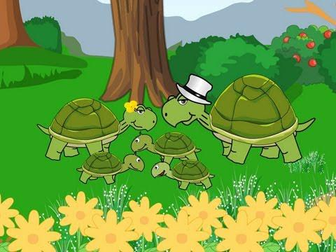 la famille tortue youtube