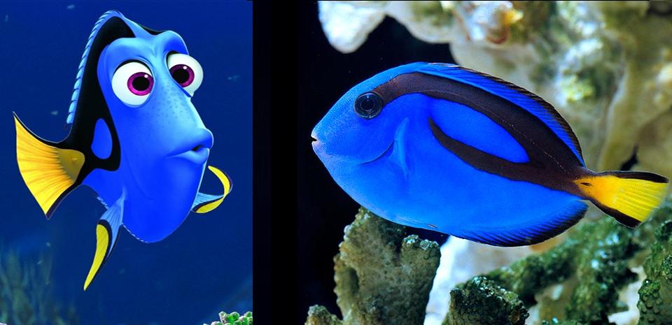 poisson dory