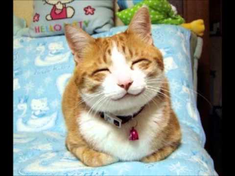 rire de chat