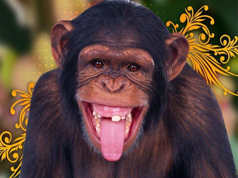 singe rigolo