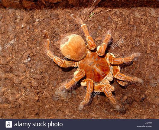 spider scrabble